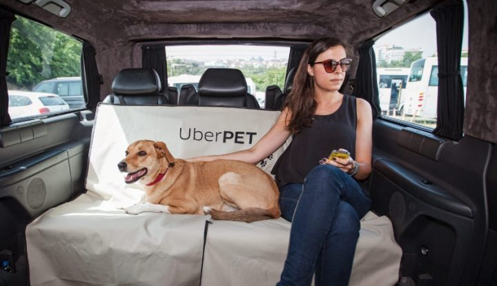 Take Your Pet Along For The Ride