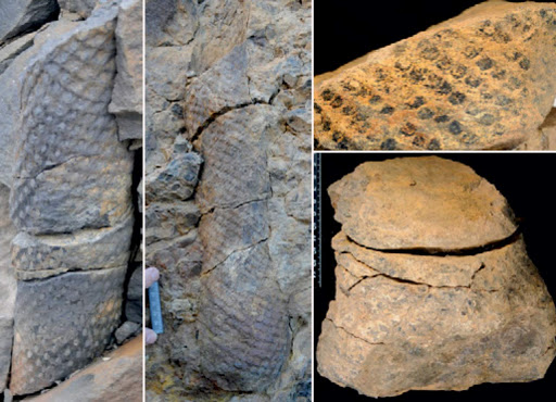Fossilized Plants Provide Insight