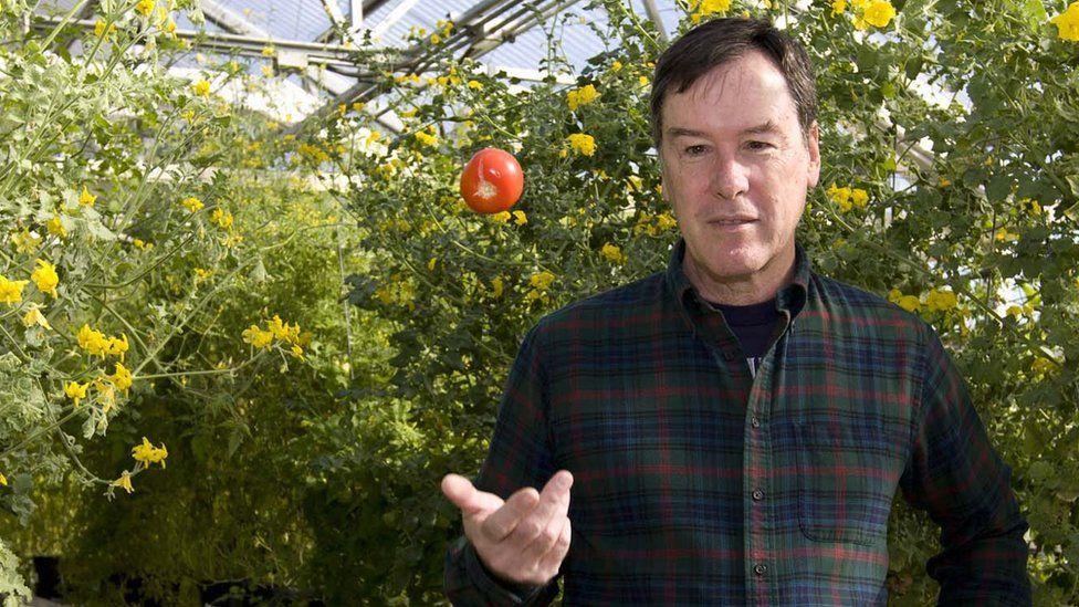 Professor Harry Klee Studies Tomatoes